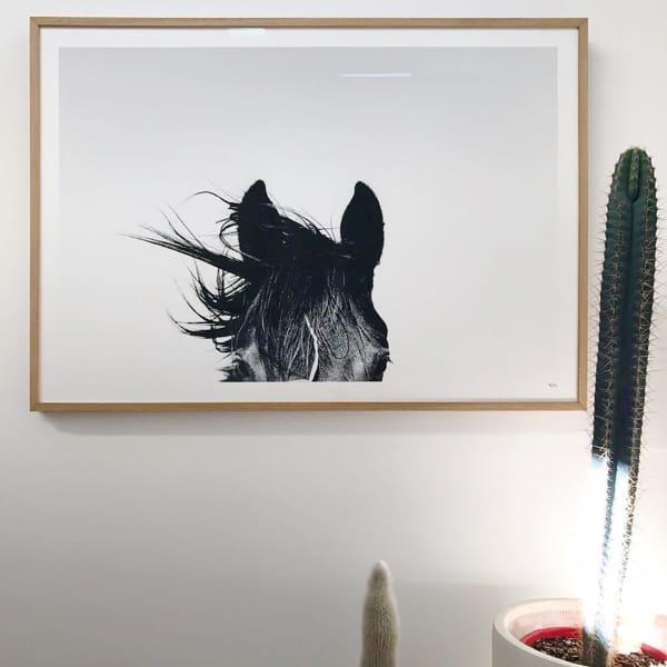 framed-pampa-horse-1