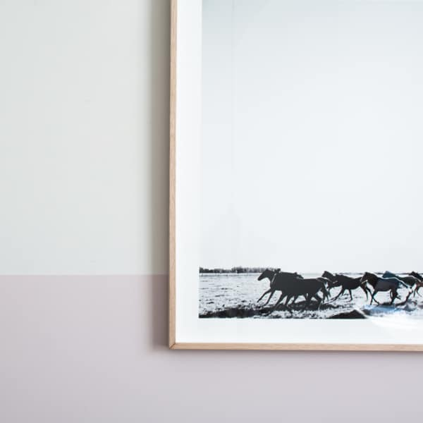 framed-pampa-horse-41-close