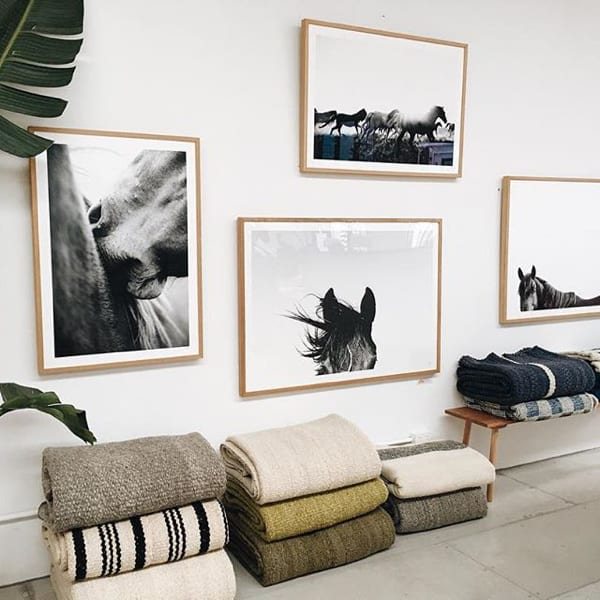 framed-pampa-horse-cluster